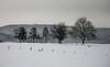 winter landscape (Nicola G. Fotografie) Tags: winter winterlandschaft landscape sauerland nrw kallenhardt rüthen schnee bäume wald verschneit wandern schwarzweis monochrome natur landschaft felder ländlich countryside trees fields