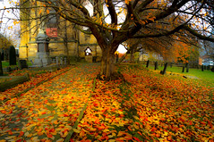 Autumnal Carpets? (howard1916 - Something for everyone!) Tags: autumn leaves pathway churchyard church trees
