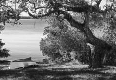Tree and Boat (Tim Ravenscroft) Tags: tree boat shore spanishpoint sarasota florida usa monochrome blackandwhite