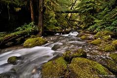 Beautiful Oregon forest (JSB PHOTOGRAPHS) Tags: ww copy dorena cottagegrove bricecreekfalls oregon forest moss rocks trees creek water nikon d90 tokina 1116mm ferns longexposure