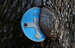 Quand la nature reprend ses droits (Pi-F) Tags: bleu écorce signe arbre indication force