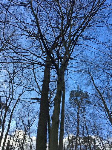 Buche-Eiche Liebespaar im Reliktwald Lampertheim  , NGIDn1312254263
