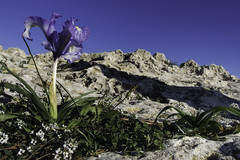 L'ombra della luce (Lumase) Tags: crocus flower autumn shadow rock cliff beautyinnature cagliari sardinia