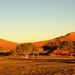 DSC08107 - NAMIBIA 2013