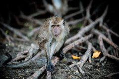 monkeys-1013