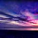 Dog Beach After Sunset ~ digital paint effect