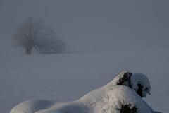 White hangover (Ian@NZFlickr) Tags: mist snow man tree broken country canterbury mackenzie fallen nz stump