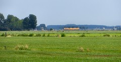 20150710 Kamperlijntje, vanaf de Zwolseweg (Wattman (trams, treinen, etc)) Tags: nederland zomer gras polder overijssel weiland landschap buffel warmte boemeltje boemelend