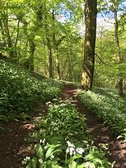 Photo of A woodland wander