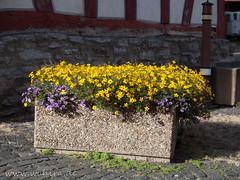 "Backhaus Ebersgöns • <a style=""font-size:0.8em;"" href=""http://www.flickr.com/photos/55428297@N00/19438208095/"" target=""_blank"">View on Flickr</a>"