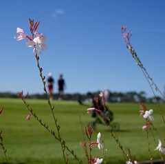 Golf de Port Bourgenay (a n n e s o D) Tags: golf lumix vacances holidays vende portbourgenay gx7 lumixgx7