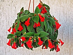 (Selin_S) Tags: life new flowers light red flower color cute green nature beautiful look wall garden lights nikon colorful neon great decoration flowerpot lovely capture decorate naturel