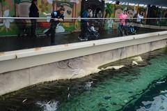 Feeding time in the shark tank - Sydney Aquarium (avlxyz) Tags: aquarium sydney australia sydneyaquarium fb5
