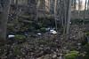 Bäcken i Mörby uppströms, stenbron #4-1 (George The Photographer) Tags: mörby dokumentera torplämning stenmur sten mossa höst skog abandoned öppning dörr fors fallhöjd biflöde långslutartid lönn lönnskog lövskog mjukt nyckelbiotop natur stenblock stenbro trädstam trädstammar vatten vattenyta turingeån skum sweden se