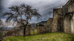 Le vieil arbre et le chat (Tra Te E Me (TTEM)) Tags: lumixfz1000 p cameraraw hdr jura frontenay arbre hiver grille château chat ciel nuages