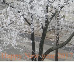 Happy New year  2017 , peace for everyone ! (Marinyu..(*-*)) Tags: hoarfrost happynewyear zúzmara winter tél tree boldogúévet white crystal flowers laceflower csipke fehércsipke frozen delicious