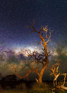 Gnarly Tree and the Milky Way - Cataby, Western Australia