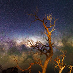 Gnarly Tree and the Milky Way - Cataby, Western Australia thumbnail