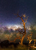 Gnarly Tree and the Milky Way - Cataby, Western Australia (inefekt69) Tags: panorama stitched mosaic ms ice milky way cosmology southernhemisphere cosmos westernaustralia australia dslr longexposure rural nightphotography nikon stars astronomy space galaxy astrophotography outdoor milkyway core great rift ancient sky 35mm d5100 landscape cataby lake dead tree gnarly landscapeastrophotography lone lightpainting