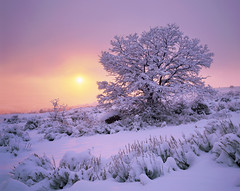 Sunset through the Winter Storm (AlexBurke) Tags: utah film landscape sunset tree snow winter ogden velvia 4x5 large format