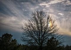 Sundog (builder24car) Tags: sky sundog clouds tree winterday wakecounty raleighnorthcarolina