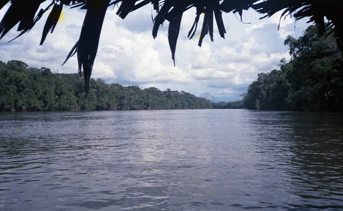 Rio Orinoco, Amazonian Jungle