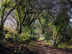 2017 Bike 180, Ride 5, 28th January. (Photopedaler) Tags: 2017bike180 cornishcycling woodland bicycle trees paths tracks mountainbiking rural countryside