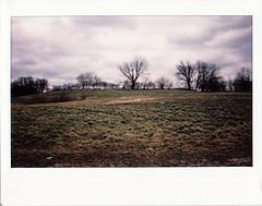 ... (brownbeatle) Tags: instaxwide210 fujiinstaxwide fujifilminstax landscape analog film filmisnotdead colorfilm instantfilm grassland winter tree silhouette