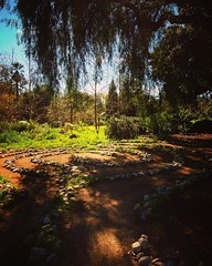 Walking the labyrinth Take a contemplative walk around the labyrinth to clear the mind. #labyrinth #garden #nature #outdoors #meditation #trees #plants #LA #losangeles #california #ig_losangeles #losangeles_gram #wheream_I_LA #insta_losangeles #cali_gramm (dewelch) Tags: ifttt instagram walking labyrinth take contemplative walk around clear mind garden nature outdoors meditation trees plants la losangeles california iglosangeles losangelesgram whereamila instalosangeles caligrammers lagrammers losangelesgrammers discoverla conquerla unlimitedlosangeles californiacaptures uglagrammers iggarden flowersofinstagram flowerstagram treestagram rainbowpetals plantstagram