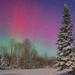 Aurora Trails Short
