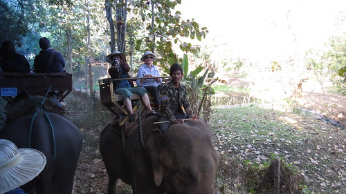 Forest trek on elephant back - 2-way traffic - Chiang Mai, Thailand
