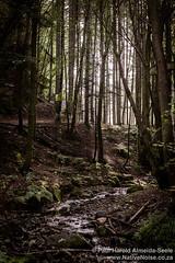 Forest near Falkland, Scotland