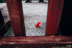 IMG_9328 (Tacolaire) Tags: 台灣 風景 生活 小品 攝影