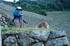 Peru-0709.jpg (Matt and Debbie) Tags: peru llama 2015 wayna winaywayna wiñay