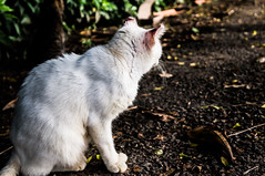 Gato Branco (KakaR2R) Tags: cats white nature animal animals cat natureza gato animais whitecat sementeira gatobranco parquedasementeira parqueaugustofranco