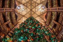 Holidays at Animal Kingdom Lodge (MattStemerman) Tags: holidays resort d750 disneyworld waltdisneyworld disney christmastree hotel animalkingdomlodge wdw christmas nikon