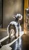 Greta al amanecer (michellangelof) Tags: pet mascota schnauzer mapa tonal luz