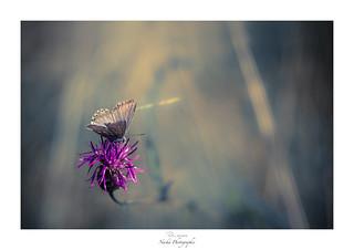 Nectar au parfum de délice