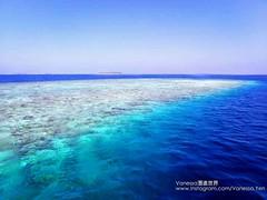 Coral reef 珊瑚礁  IG@Vanessa.Yen  #Maldives #VanessaYen #Vanessa潛進世界 #馬爾地夫 #此生必去馬爾地夫 #假期 #旅行 #海島生活 #IslandLife #印度洋上的珍珠 #印度洋 #SunnySideOfLife #TheBestJobInTheWorld #NaturallyPlayful #最棒的工作 #樂在工作 #樂在生活 #環礁 #Atoll #Reef #珊瑚礁#Sunny #好天氣 (vanessayen1) Tags: atoll vanessa潛進世界 印度洋 假期 此生必去馬爾地夫 islandlife 環礁 reef sunny 印度洋上的珍珠 海島生活 好天氣 旅行 sunnysideoflife 馬爾地夫 樂在生活 樂在工作 最棒的工作 珊瑚礁 thebestjobintheworld maldives vanessayen naturallyplayful