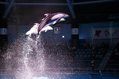IMG_7939 (Jun.Ohashi) Tags: aquaparkshinagawa aquarium shinagawa アクアパーク品川 品川 水族館 港区 東京都 日本 jp canon キャノン eos eos6d tamronspaf2875mmf28xrdildasphericalifmacroa09 tamron タムロン sp 2875mm f28 di ld aspherical if macro a09