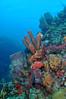 Scuba diving Dominica (Izzysan) Tags: nikon nikondslr nikonslrgroup nikondigital inon ikelite dominica dominicaphotography dominicaphoto dominicaimage diving divephotoguideunderwaterphotography lightstalking nphotomag ngc underwater underxmag finsgroup finsmagazine scuba scubadiving wetpixelunderwaterphotography tokina1017mmfisheye seascapeandshoreline sea seascapes caribbean recreation sponge smithsonian animalplanet
