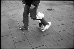 (I Wanna Be Your Puppy) (Robbie McIntosh) Tags: leicam2 leica m2 rangefinder streetphotography 35mm film pellicola analog analogue negative leicam summicron analogico leicasummicron35mmf2iv blackandwhite bw biancoenero bn monochrome argentique summicron35mmf2iv autaut dyi selfdeveloped guessexposure nometering kodaktmax400 kodak tmax400 tmax tetenalultrafinplus ultrafinplus filmisnotdead summicron35mmf2preasph 800iso strangers dog puppy
