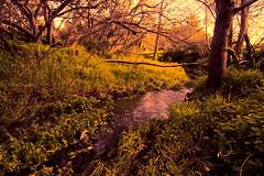 Dreamy scenes from Baxter Creek. (Walt Barnes) Tags: baxtercreek fantasy art artsy dream dreamy psychedelic el cerrto calif ca scenery nature trees brambles landscape eos60d 60d canoneos60d canon eos wdbones99