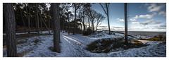 Küstenwald (bavare51) Tags: dars küstenwald schnee bäume ostsee panorama winter landscape natur