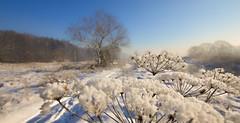my winter (Beata Jakubas) Tags: jakubasbeata jakubas nikon landscape view snow winter cold poland silesia river