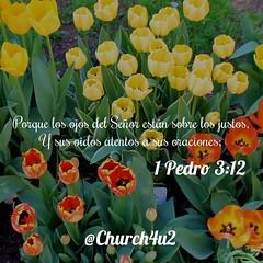 """1 Pedro 3-12 """"Porque los ojos del Señor están sobre los justos, Y sus oídos atentos a sus oraciones;"""" (@CHURCH4U2) Tags: bible verse pic"""