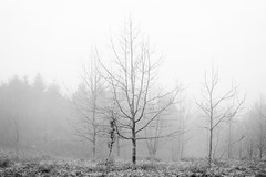 Guipúzcoa. 2016. (Jose_Pérez) Tags: winter invierno byn blancoynegro blackwhite nature naturaleza frio helada frozen frost arbol tree guipuzcoa guipuzkoa siluetas niebla fog