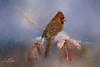 A Winters Day (ShutterByMe) Tags: animal avian beak bird birding birds branch cardinal cardinalis feathered feathers ice male northerncardinal northerncardinals orange painterly perch perched perching red redbird redbirds snow snowy songbird songbirds texture wild wildlife winter wintry