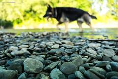 Steine mit Hund (colo_cgn) Tags: water wasser dof outdoor luna steine perspektive sieg 2015 siegfähre june2015 alpha6000