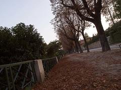 Toso_Federico_12